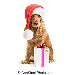 dog in santa hat with gift isolated