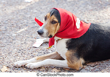 dog in scarf lying on the ground