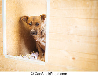 Dog in shelter - A dog in an animal shelter, waiting for a...