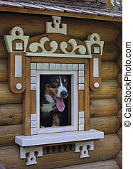 Dog in small wooden house.