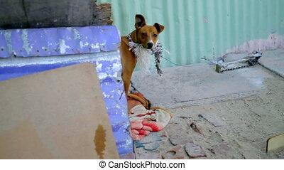 Dog in street pet house 4k - Dog in street pet house on ...