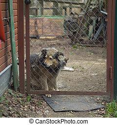 dog in stress