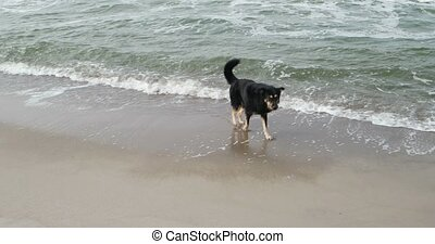 Dog in the Baltic Sea of Germany