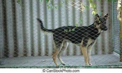 Dog in the cage.