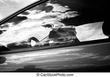 Dog in the car in reflection, black and white