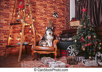 Dog in the chair in the Christmas interior