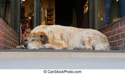 Dog in the city. Dog sleeping near shop door while passers-by are in a hurry. The vanity of life: legs of people going on the street while dog is sleeping aside. One in a crowd. Unique in the crowd