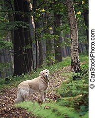 Dog in the forest - Cute dog in the woods