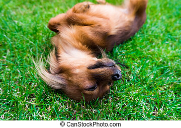 dog in the grass. young dog in the meadow - dog in the...