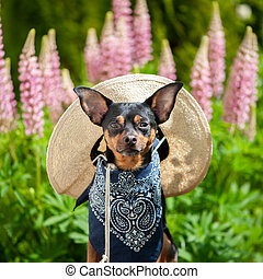 Dog in the image of a farmer, a horticulturist, a flower...