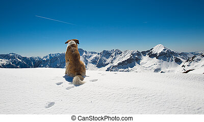 Dog in the mountains on the snow observes the landscape