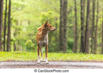Dog in the pine forest