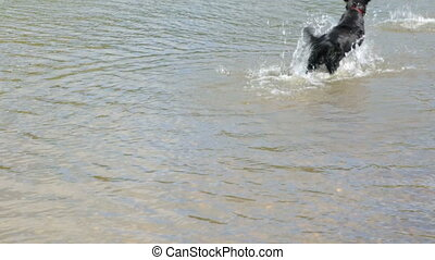 Dog in the river in summer day