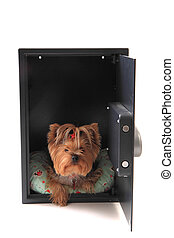dog in the safe