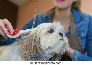 dog in the salon
