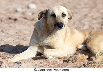 Dog in the sand