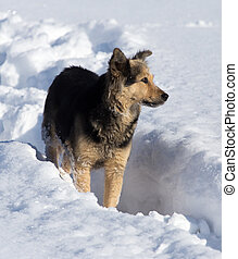 Dog in the snow in the winter