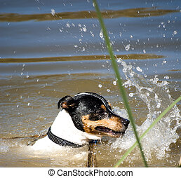 Dog in the water of a river