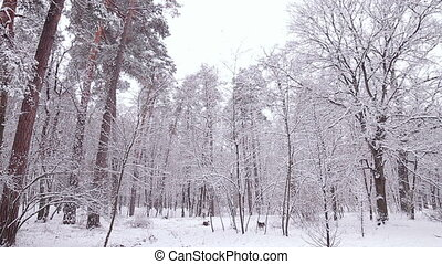 Dog in the winter forest.