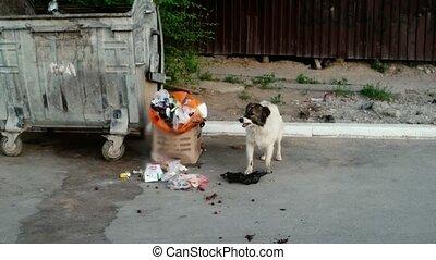 Dog in trash exploring