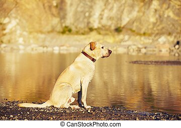 Dog in waiting