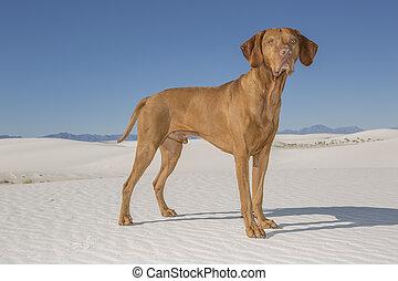 dog in white sand desert