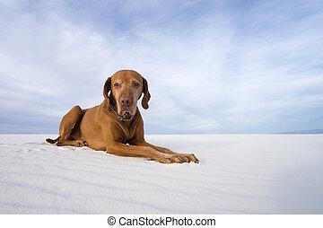 dog in white sand