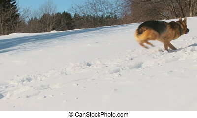 Dog in winter country