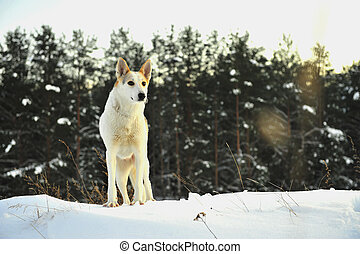 Dog in winter forest.