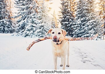 Dog in winter nature