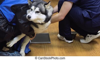 Dog in X-ray room
