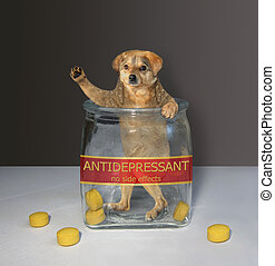 Dog inside glass jar for pills