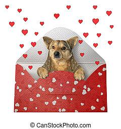 Dog inside the envelope