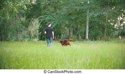 Dog Irish setter running in the park with his owner - man, slow-motion