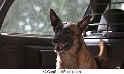 Dog is barking inside a luggage boot. Dog is barking inside...