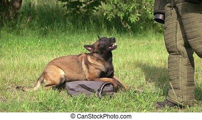 Dog is defending a bag from stranger. Dog is defending a bag...
