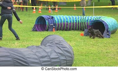 Dog is getting out of a tunnel and overtaking its owner....
