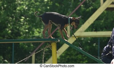 Dog is going down the ladder.