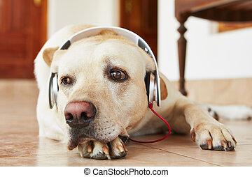 Dog is listening music