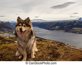 Dog is on top of a Norwegian mountain