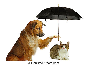 Dog is protecting a cat with a umbrella on white background