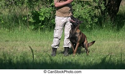 Dog is repeating movements of its owner. Man is training his...