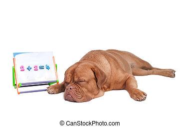 Dog is studying math