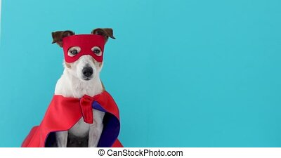 Dog jack russell super hero costume - Dog super hero...