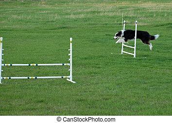 Dog Jumping at an Agility Training