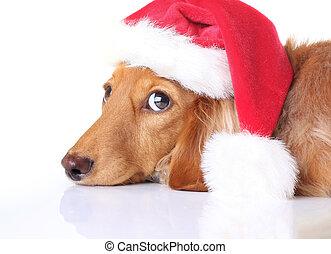 dog, kerstman