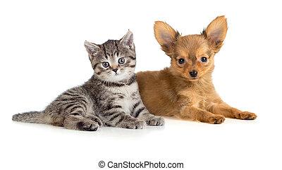 dog., kočka, spolu., kotě, štěně, ležící