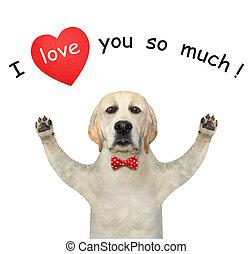 Dog labrador in love