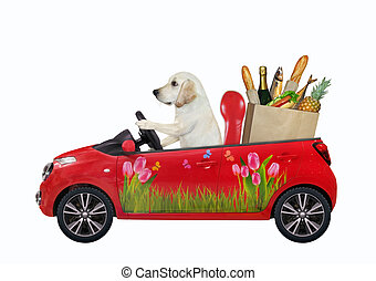 Dog labrador in red car with food
