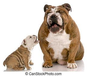 dog laughing at puppy barking